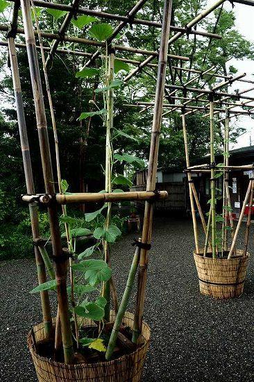 竹、笹リレー その1_e0348392_19385794.jpg