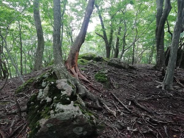 由布岳のへべ山  2020.07.25(土)_a0166196_929234.jpg