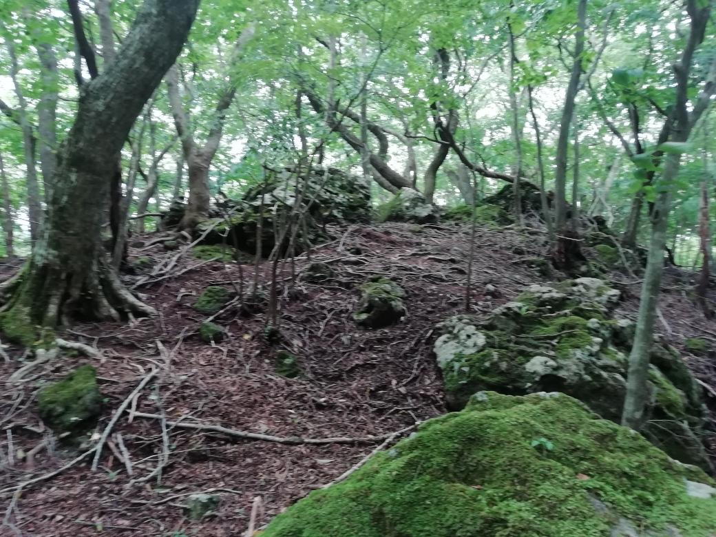 由布岳のへべ山  2020.07.25(土)_a0166196_9302496.jpg