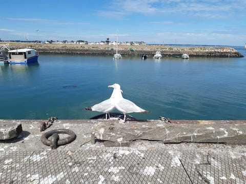 Bretagne : ブルターニュ_f0038600_15454343.jpg