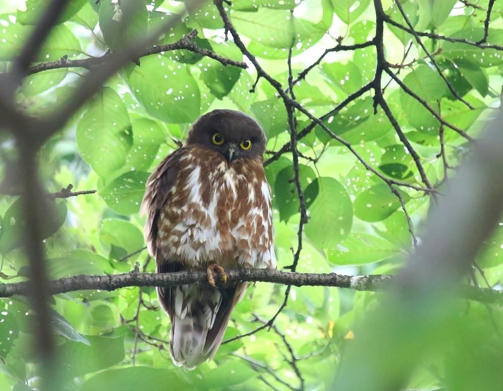 幼鳥の見張り、_f0305401_08355831.jpg