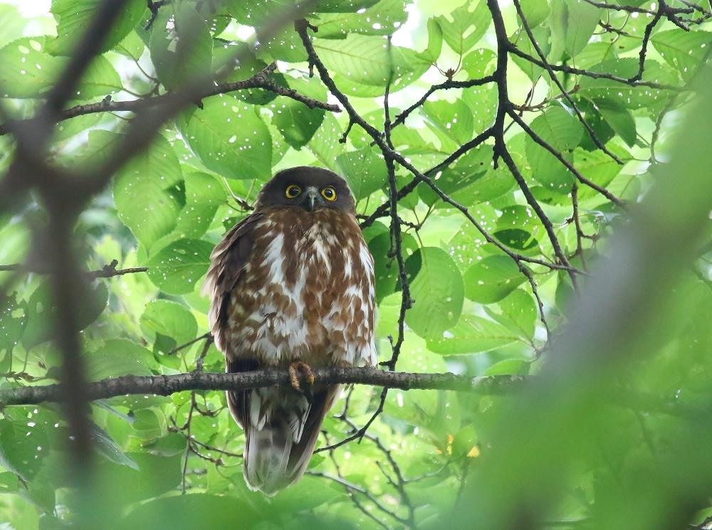 幼鳥の見張り、_f0305401_08360368.jpg