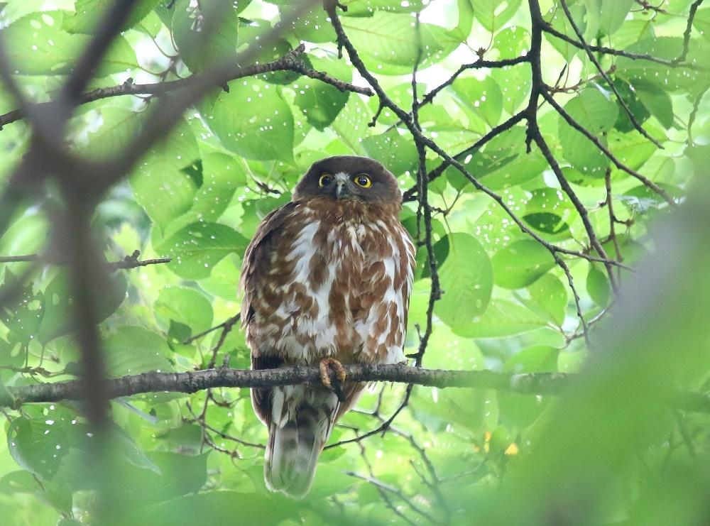 幼鳥の見張り、_f0305401_08361088.jpg