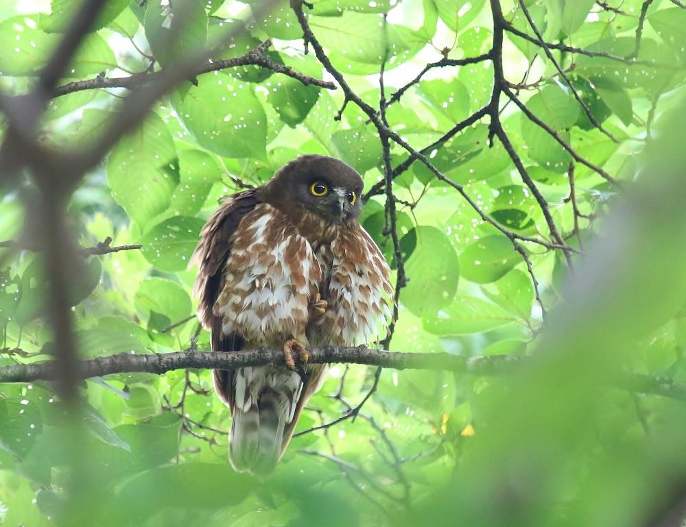 幼鳥の見張り、_f0305401_08361728.jpg