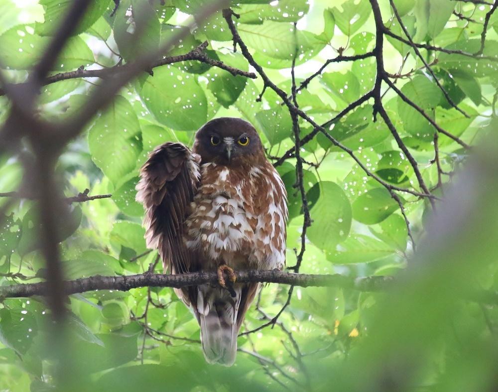 幼鳥の見張り、_f0305401_08362260.jpg