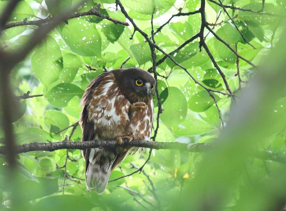 幼鳥の見張り、_f0305401_08363013.jpg