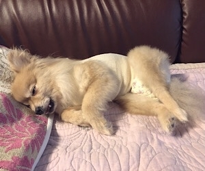 HOGO犬ひらり♡避妊手術と歯石取り_f0249610_10230543.jpg