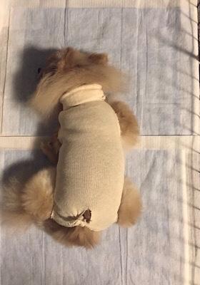 HOGO犬ひらり♡避妊手術と歯石取り_f0249610_10230648.jpg