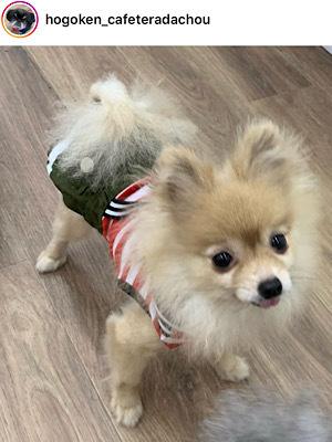 HOGO犬ひらり♡避妊手術と歯石取り_f0249610_11050662.jpeg