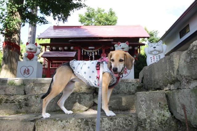 県内旅行1日目 八坂神社から大館市「秋田犬の里」へ_b0031538_14221777.jpg