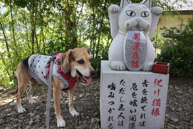 県内旅行1日目 八坂神社から大館市「秋田犬の里」へ_b0031538_14241980.jpg