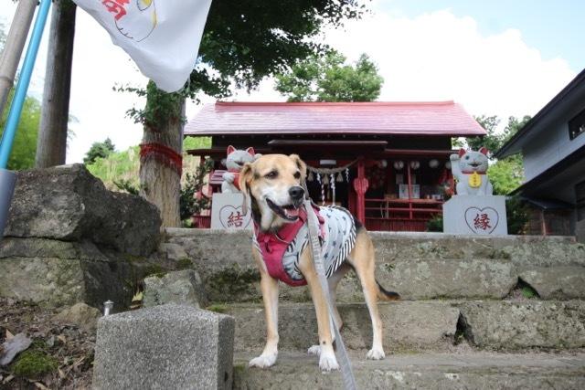 県内旅行1日目 八坂神社から大館市「秋田犬の里」へ_b0031538_14282135.jpg