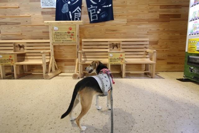 県内旅行1日目 八坂神社から大館市「秋田犬の里」へ_b0031538_15232295.jpg
