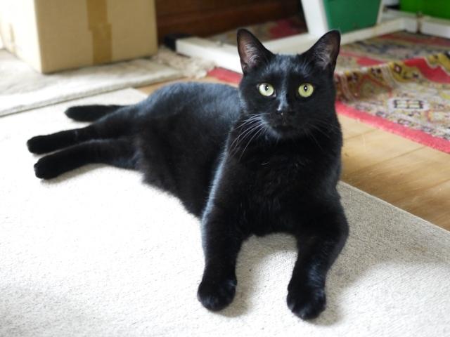 猫のお留守番 レオくん編。_a0143140_21462875.jpg