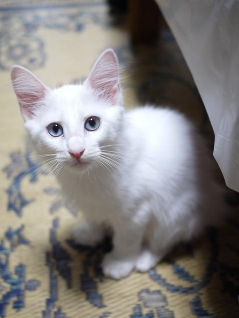 猫のお留守番 ルナちゃん編。_a0143140_22000061.jpg