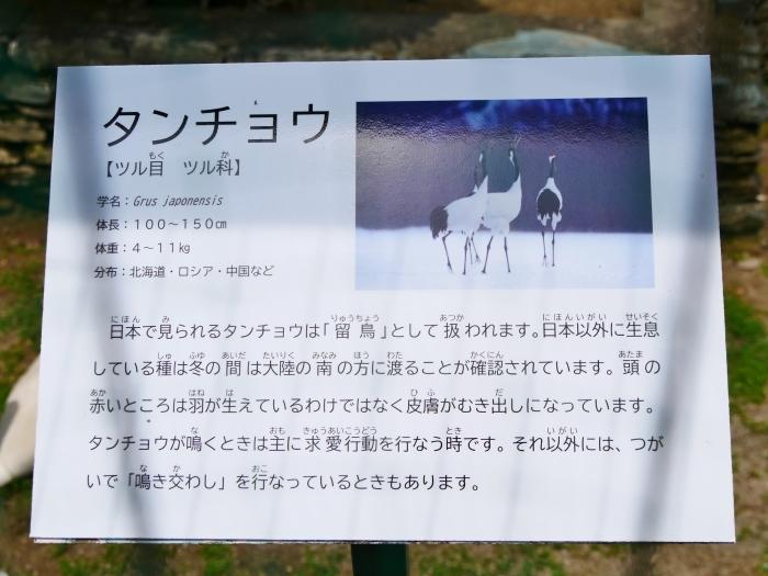 お城の動物園・タンチョウ  2020-07-28 00:00_b0093754_22221935.jpg