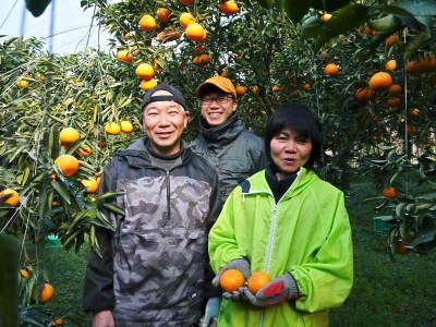 究極の柑橘『せとか』 令和2年度の収穫に向け今年も順調に成長中!着果後の様子を現地取材_a0254656_17294167.jpg