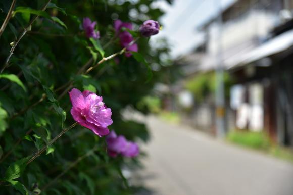 三重歴史街道「八風道」を行く_e0164563_10254138.jpg