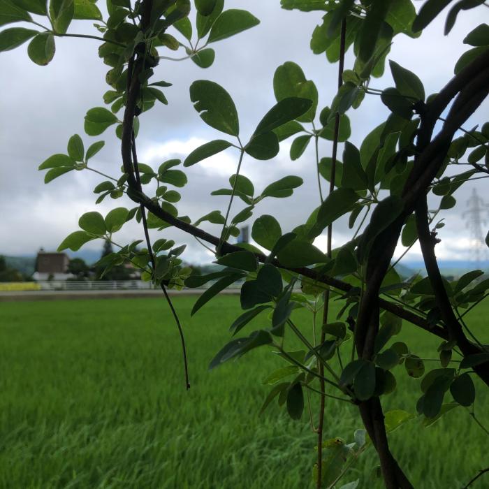 癒しと静養と竹細工と自然。  長文です_d0105967_04093645.jpg