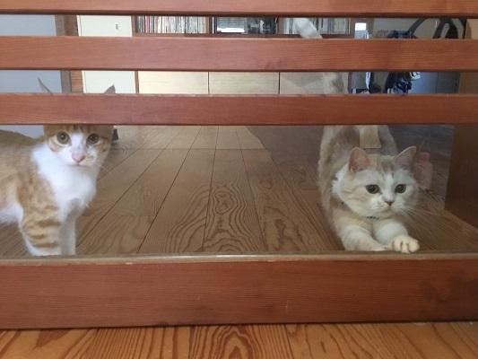 猫たちとの暮らし!_b0111173_10122270.jpg