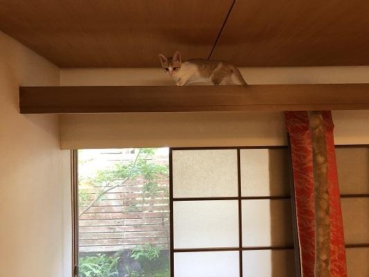 猫たちとの暮らし!_b0111173_10330257.jpg