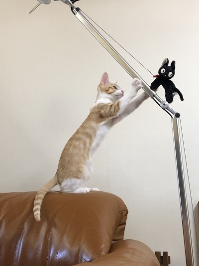 猫たちとの暮らし!_b0111173_10403517.jpg