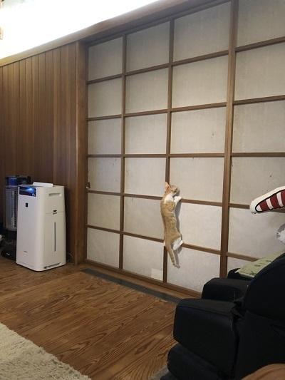 猫たちとの暮らし!_b0111173_10485214.jpg