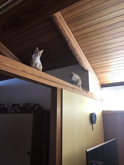 猫たちとの暮らし!_b0111173_11093500.jpg