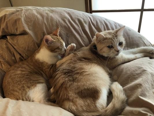 猫たちとの暮らし!_b0111173_13484218.jpg