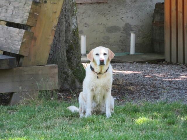 庭から脱走してしまった ゲスト犬 ルナ_c0211876_04384690.jpg