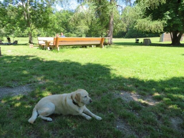 庭から脱走してしまった ゲスト犬 ルナ_c0211876_04390826.jpg