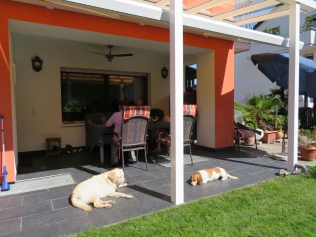 庭から脱走してしまった ゲスト犬 ルナ_c0211876_04392327.jpg