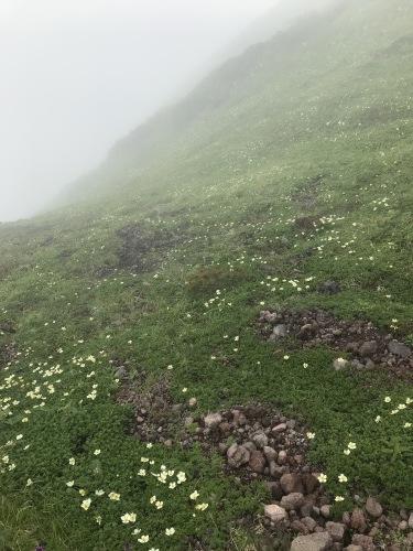 富良野岳に登りました!_d0198793_17250473.jpg