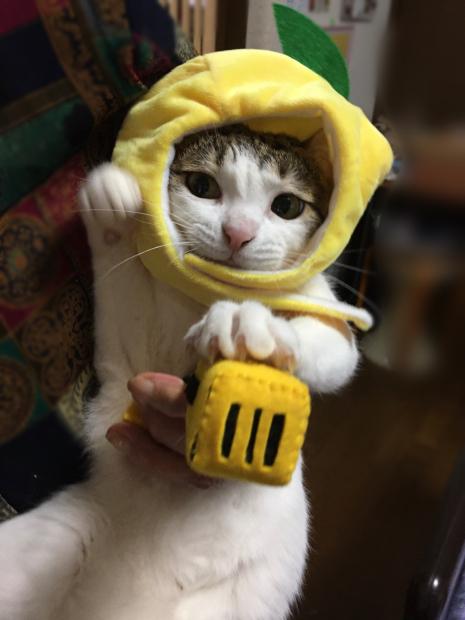 スズメ レモンいこちゃん_f0375804_06455590.jpg