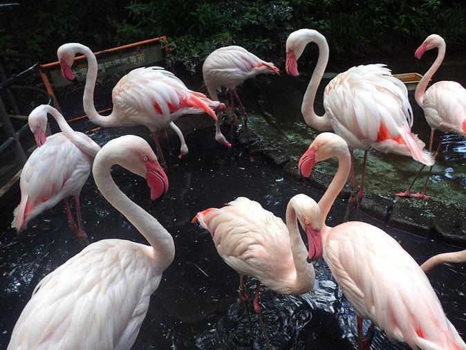 とりたちのらくえん~夏の日の鳥たち(大宮公園小動物園 September 2019)_b0355317_22083172.jpg