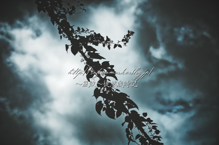 暗雲に繁茂するもの。_f0235723_15554020.jpg