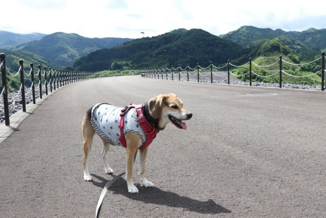 リゾートホテル「フッシュ」さんと森吉山ダム_b0031538_15592414.jpg
