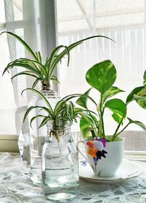 出窓の植物をかえてみました_c0036138_18234408.jpg