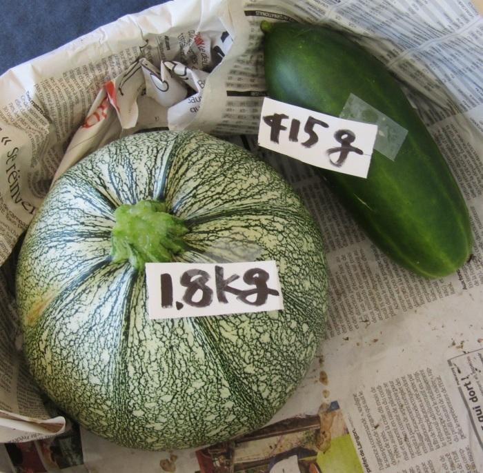 今日の収穫 丸ズッキーニ (とキュウリ)_b0287748_03555642.jpg