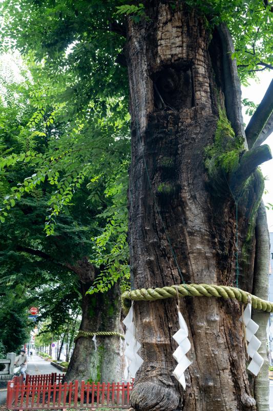 欅 老巨木の手当て_a0261169_18441699.jpg
