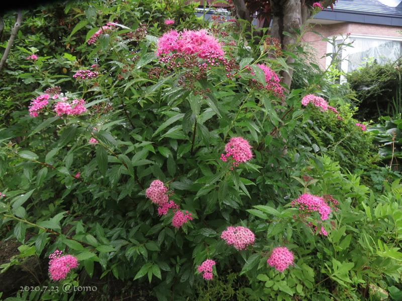 夏色花壇とシトシト雨_f0067179_22045231.jpg