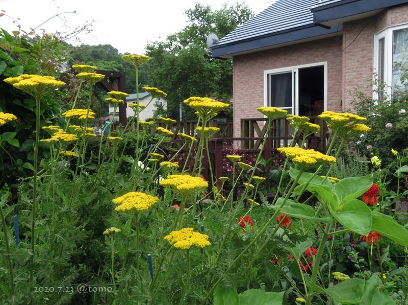 夏色花壇とシトシト雨_f0067179_22050406.jpg