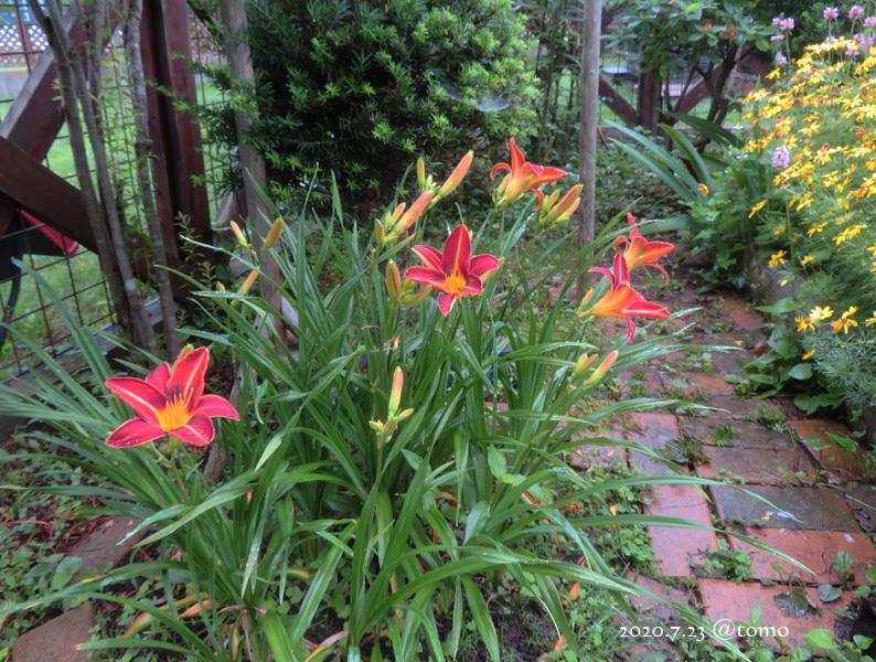 夏色花壇とシトシト雨_f0067179_22052381.jpg