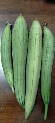 丝瓜、长豆角、袖珍玉米、米苋、黄瓜_d0007589_19555588.jpg