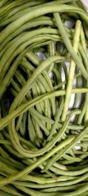 丝瓜、长豆角、袖珍玉米、米苋、黄瓜_d0007589_19562241.jpg