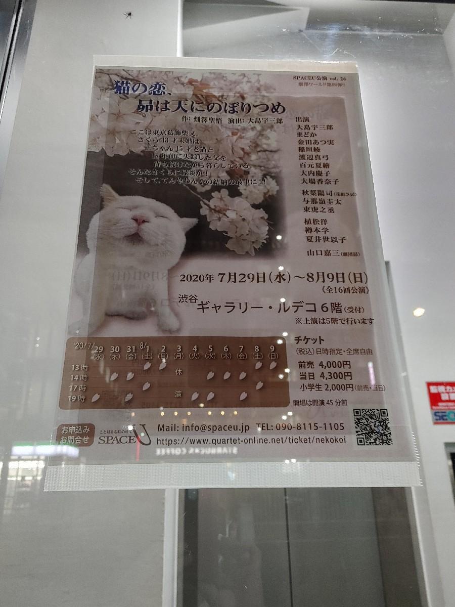 初日!『猫の恋、昴は..._f0138311_23133023.jpg