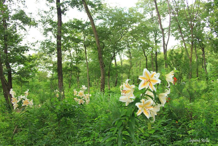 史跡公園の花たちと_d0015026_15361017.jpg