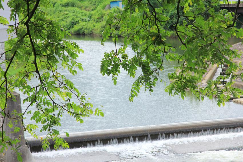 史跡公園の花たちと_d0015026_15382160.jpg