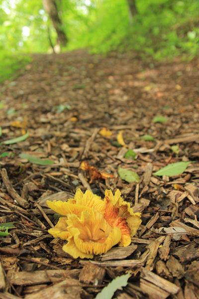 史跡公園の花たちと_d0015026_15384345.jpg