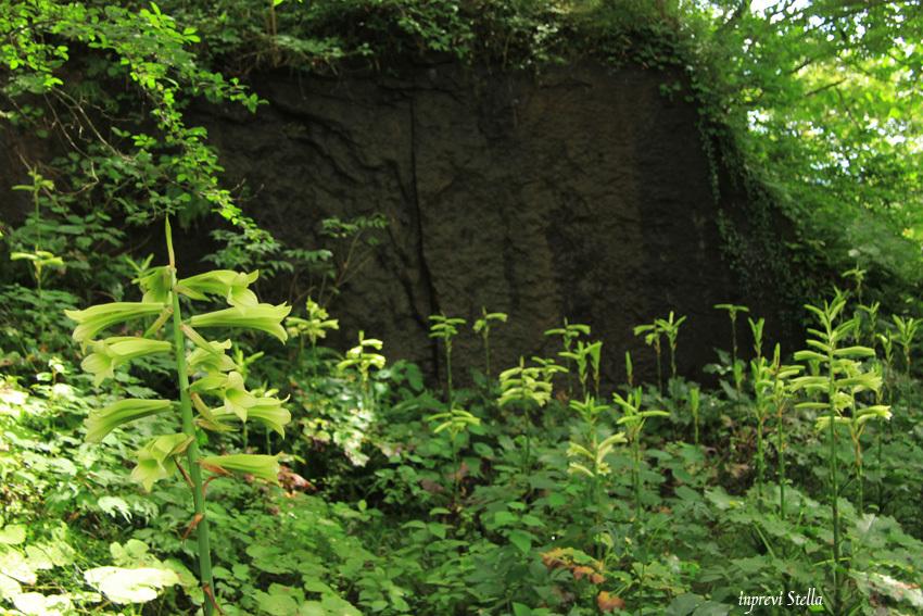 史跡公園の花たちと_d0015026_15392927.jpg